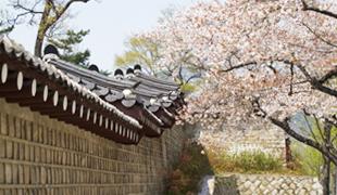 首尔的春天