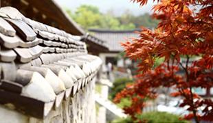 首尔的秋天