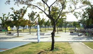 绿荫树广场