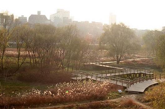 汝矣池, 生态莲池