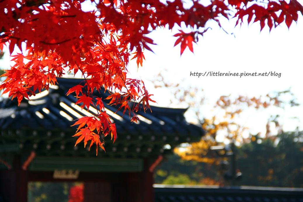 首爾遊記:那年秋天,楓在吹