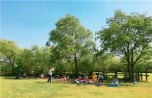 为增进市民健康,世界杯公园推出森林浴和足浴治愈体验