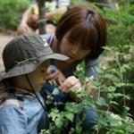 首尔市推出多个公园迎春活动