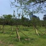 汉江正在复原!首尔市建造完成四大主题汉江林