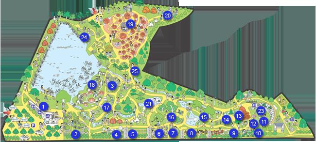 树木园地图