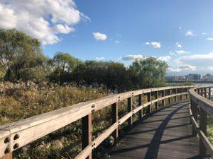汉江公园秋季散步路BEST 4推荐
