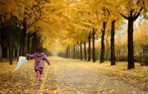 在城市中尽享秋日风光,首尔枫叶路90处