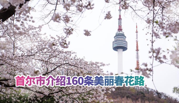 首尔市介绍160条美丽春花路