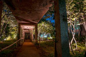 仙游岛公园夜景