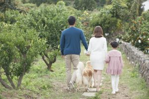 """""""世界家庭庭园""""招募居住在首尔的外国人参与者"""