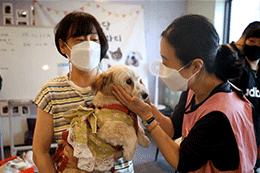 首尔市为激活流浪动物领养工作发力
