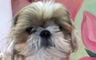 【元淳的市政日记54】「宠物登记制」找回宠物之路