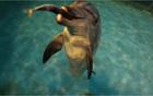 """[元淳的希望日记109] 海豚""""Jedoli""""返回故乡"""