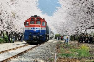 春花主题旅游列车