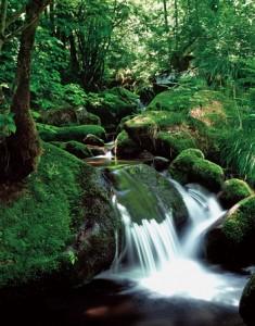 上东苔藓溪谷