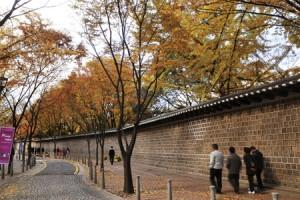 银杏树、石墙、红砖路